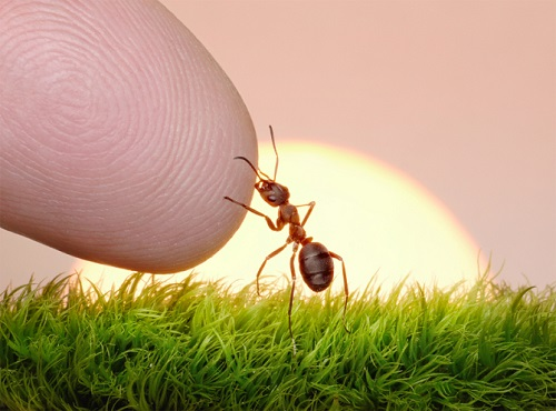 little ant meets human